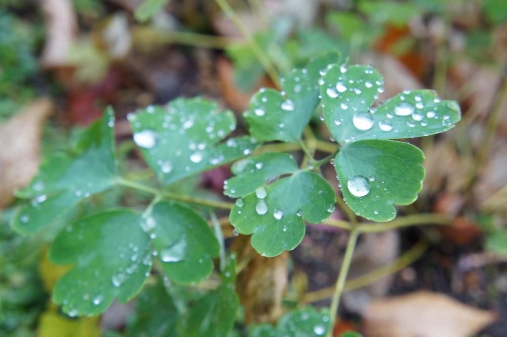 秋の雨あがり